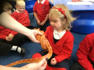 Chorizo the snake